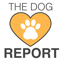 My Dog Report